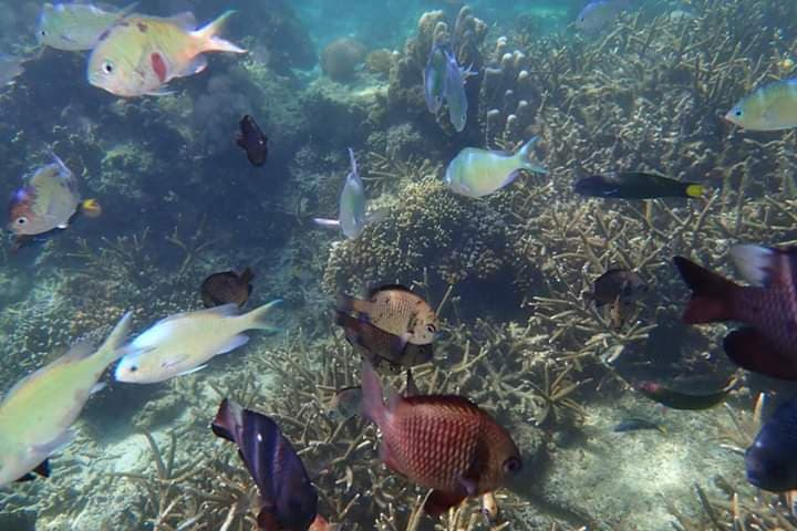 Different colourful fish - snorkeling at Tambisaan Beach