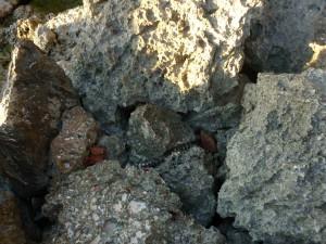 dead snake on the rocky coast
